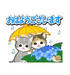 梅雨~夏 もこもこ猫ちゃんズ(個別スタンプ:1)