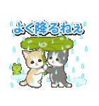 梅雨~夏 もこもこ猫ちゃんズ(個別スタンプ:7)