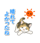 梅雨~夏 もこもこ猫ちゃんズ(個別スタンプ:10)