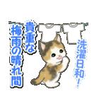 梅雨~夏 もこもこ猫ちゃんズ(個別スタンプ:12)