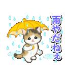 梅雨~夏 もこもこ猫ちゃんズ(個別スタンプ:15)