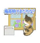 梅雨~夏 もこもこ猫ちゃんズ(個別スタンプ:20)