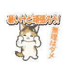 梅雨~夏 もこもこ猫ちゃんズ(個別スタンプ:25)
