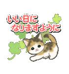 梅雨~夏 もこもこ猫ちゃんズ(個別スタンプ:40)