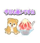 赤ちゃん豆柴と夏スイーツ(個別スタンプ:5)