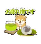 赤ちゃん豆柴と夏スイーツ(個別スタンプ:13)