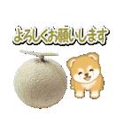 赤ちゃん豆柴と夏スイーツ(個別スタンプ:19)
