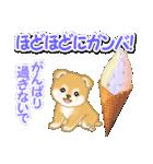 赤ちゃん豆柴と夏スイーツ(個別スタンプ:24)