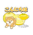 赤ちゃん豆柴と夏スイーツ(個別スタンプ:35)