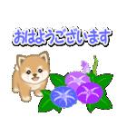 小豆柴の夏(個別スタンプ:1)