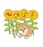 小豆柴の夏(個別スタンプ:3)