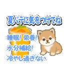 小豆柴の夏(個別スタンプ:10)