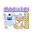 小豆柴の夏(個別スタンプ:12)