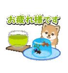 小豆柴の夏(個別スタンプ:17)