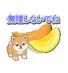 小豆柴の夏(個別スタンプ:19)