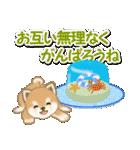 小豆柴の夏(個別スタンプ:20)