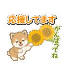 小豆柴の夏(個別スタンプ:26)