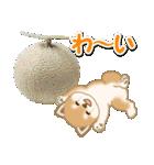 小豆柴の夏(個別スタンプ:29)