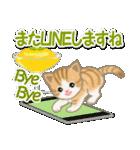 ちび猫の夏(個別スタンプ:40)