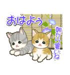 夏~秋 もこもこ猫ちゃんズ(個別スタンプ:1)