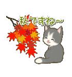 夏~秋 もこもこ猫ちゃんズ(個別スタンプ:16)