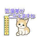 夏~秋 もこもこ猫ちゃんズ(個別スタンプ:17)