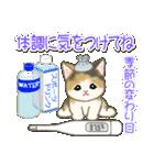 夏~秋 もこもこ猫ちゃんズ(個別スタンプ:18)
