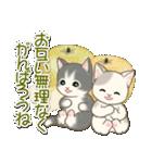 夏~秋 もこもこ猫ちゃんズ(個別スタンプ:19)