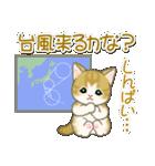 夏~秋 もこもこ猫ちゃんズ(個別スタンプ:21)