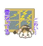 夏~秋 もこもこ猫ちゃんズ(個別スタンプ:23)