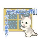 夏~秋 もこもこ猫ちゃんズ(個別スタンプ:24)