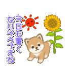 夏~秋 よちよち豆柴(個別スタンプ:2)