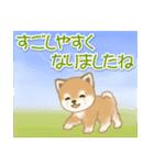夏~秋 よちよち豆柴(個別スタンプ:12)
