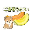 夏~秋 よちよち豆柴(個別スタンプ:20)