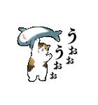 動く!サメにゃん(個別スタンプ:3)