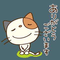 [LINEスタンプ] ありがとう☆猫のミーニャ