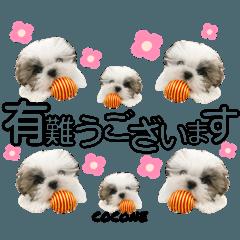 [LINEスタンプ] Coconeのスタンプ♡