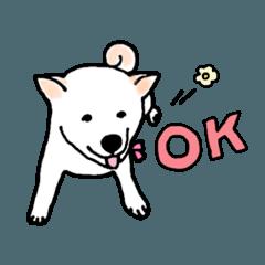 [LINEスタンプ] しば犬ララのHAPPY DAYS♡