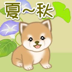 [LINEスタンプ] 夏~秋 よちよち豆柴