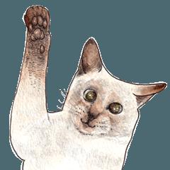 [LINEスタンプ] にくきゅーハイタッチ猫さんスタンプ